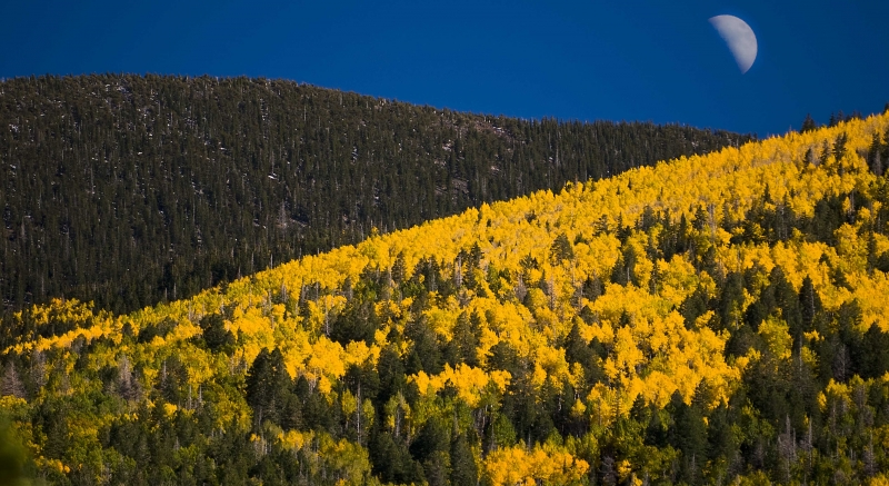 Moon And Aspens