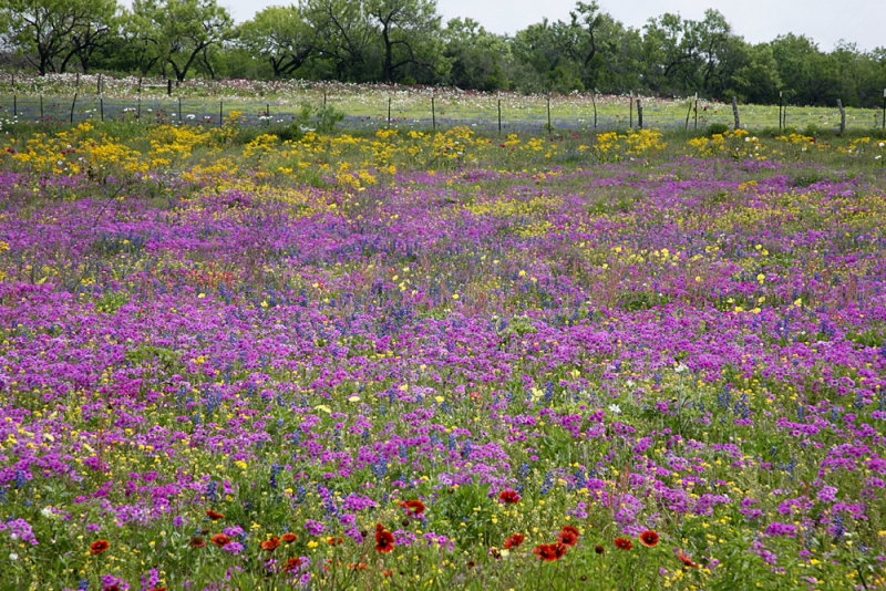 Texas Countryside In Spring