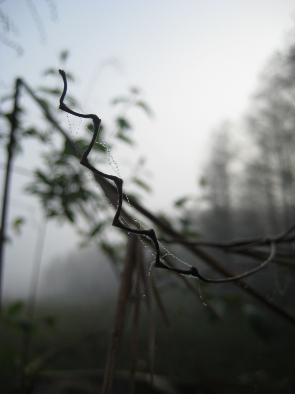 Morning Dew And Fog