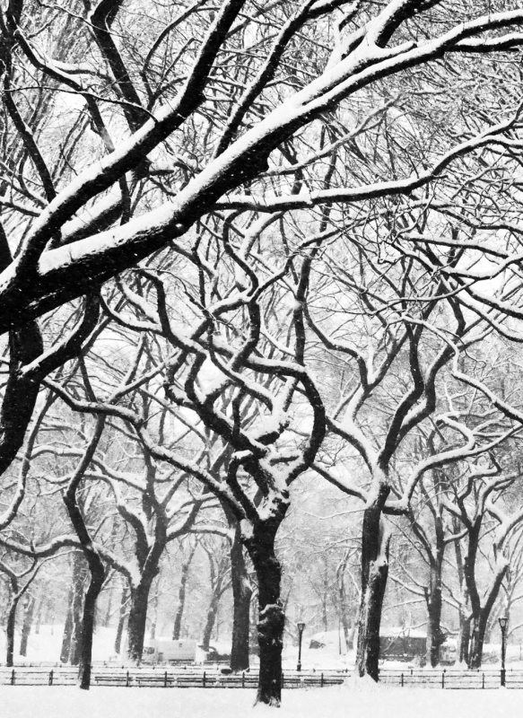 Abstract Winter Trees