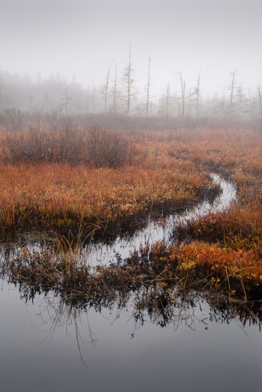 Foggy Day At Seawall Bog
