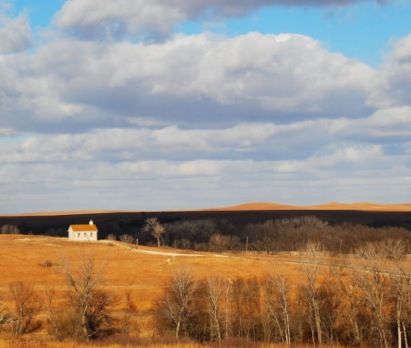 Tall Grass Prairie In Winter
