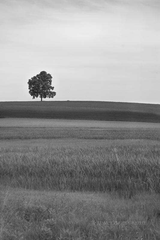 Tree And Landscape