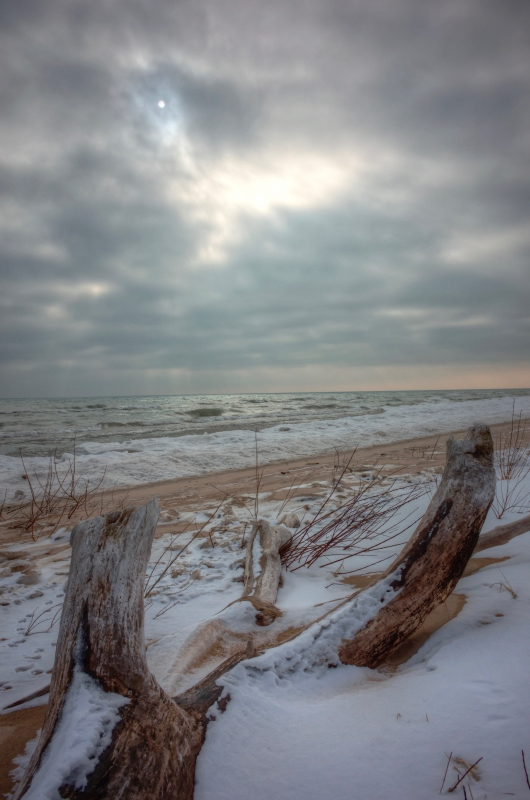 Driftwood In Winter