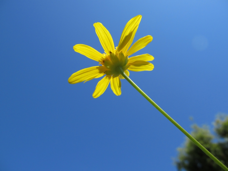 Yellow Bloom In A Blue Sky