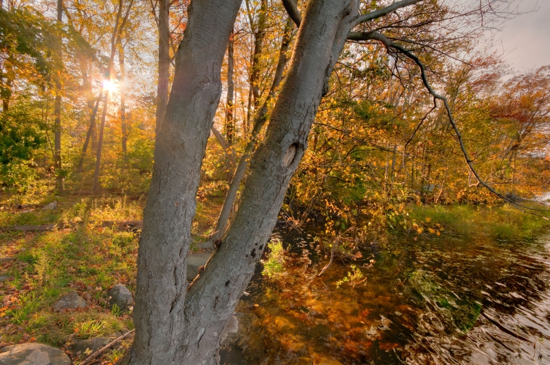 Fall, Trees, Leaves, Backlit, Sun, Hdr