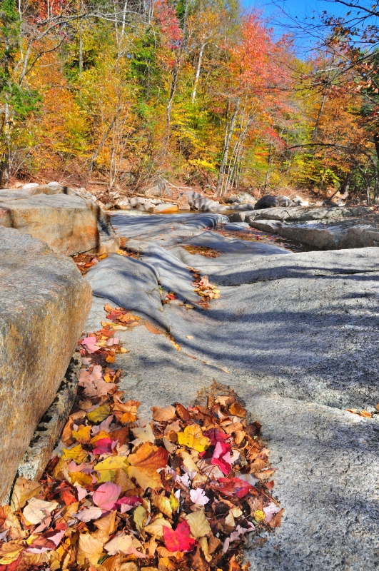 Fall Leaves On Granite River Bedrock