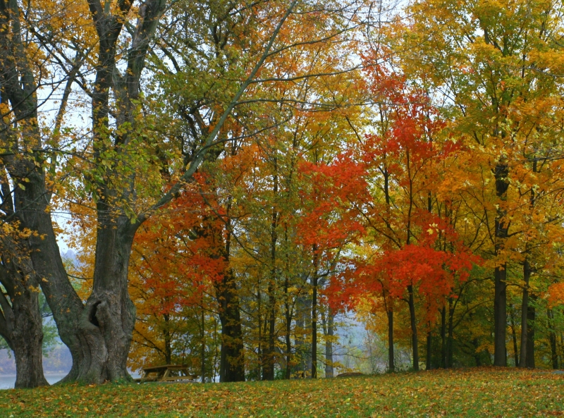 Fall Along The Ohio River