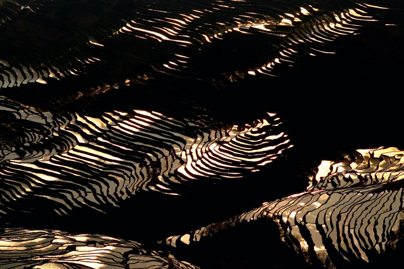 Sunlight On The Rice Terraces