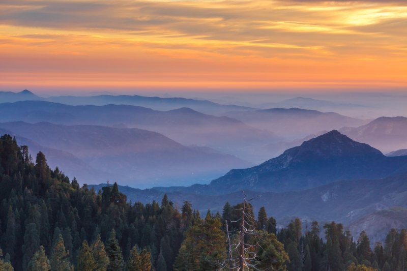 Sequoia Sunset