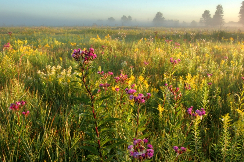 Lakeplain Prairie Morning