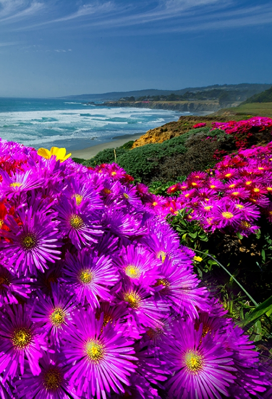 Spring Ice Plant On The Bluff