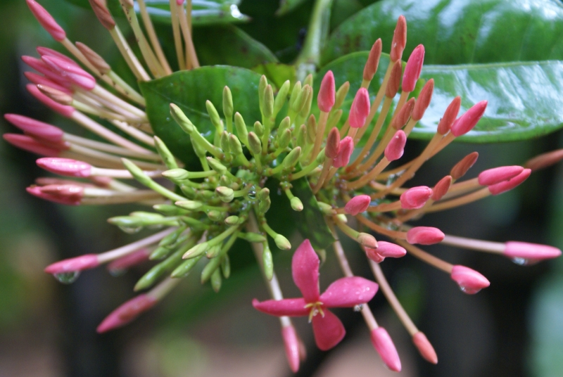Buds And Flower