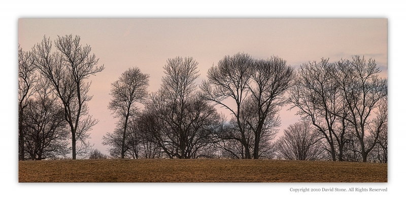 Trees At Appleton Farm Sunrise