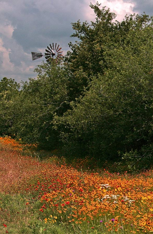 Windmill And Wildflowers