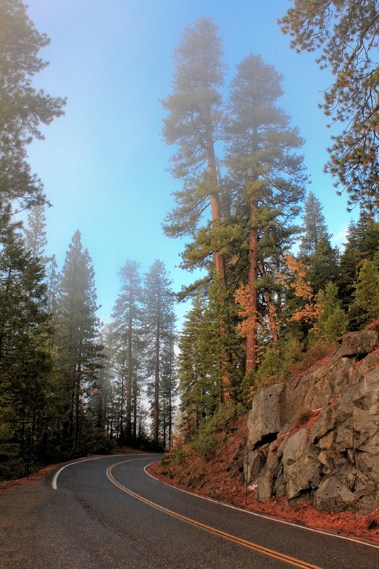 Wawona Road, Yosemite National Park