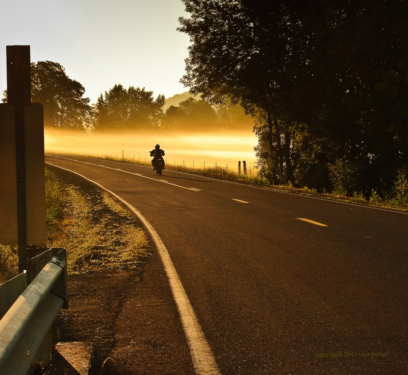 Golden Fog And Motorcyclist