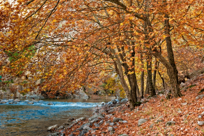 Trees Over Aoos River At Konitsa