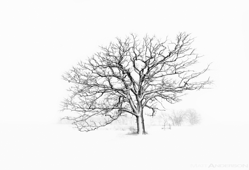Winter Tree #5