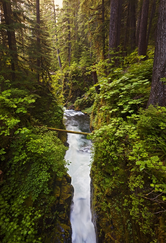 Sol Duc River At Sunset