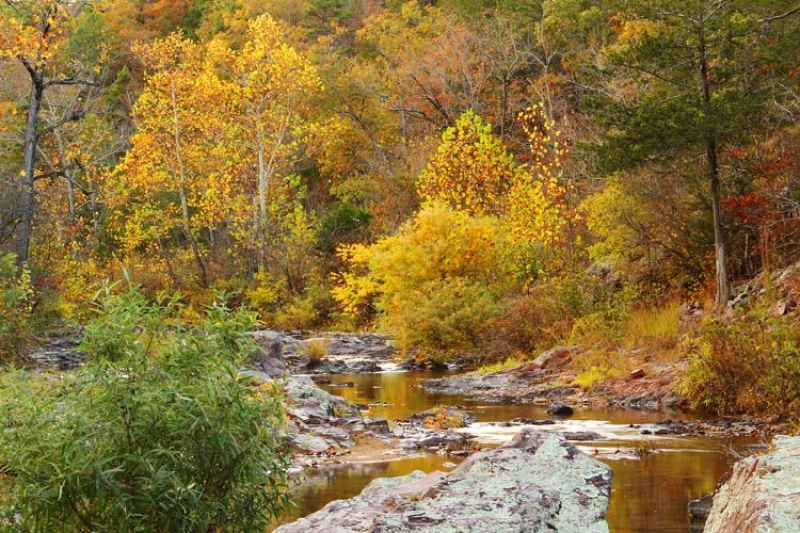 Rocky Creek In Autumn 1