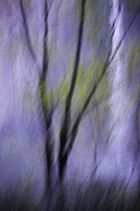 Abstract Of Tree And Waterfall