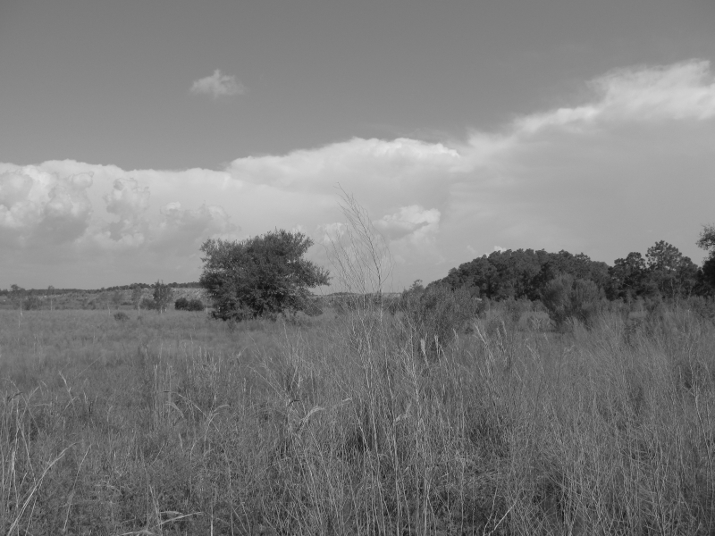 Field In Black And White