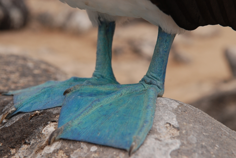 Better Blue Feet Than A Blue Mood