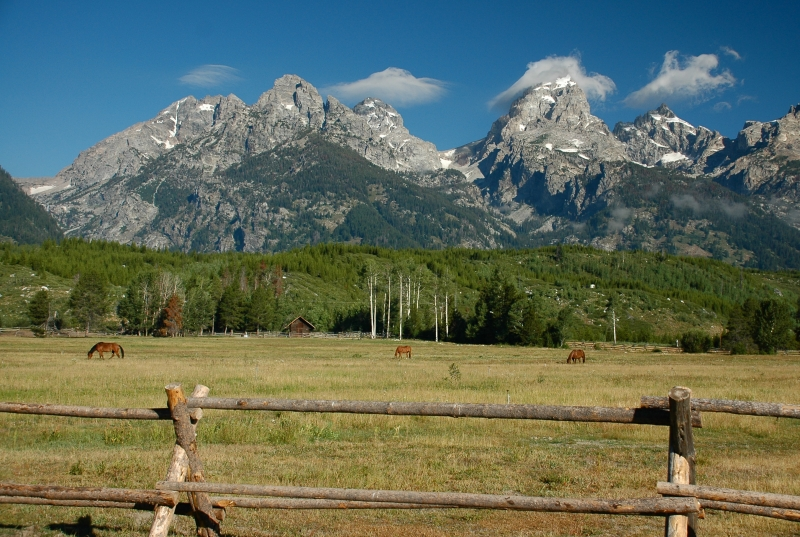 Horse Farm Near Tetons