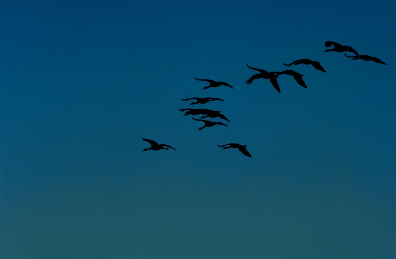 Flight At Dusk
