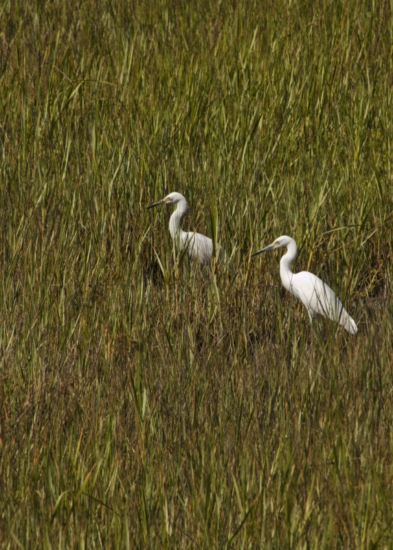 A Pair Of Birds In The Marsh