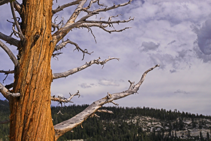 Yosemite Storm Clouds