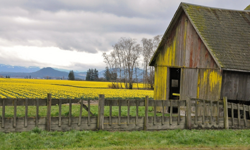Old Yellow Barn