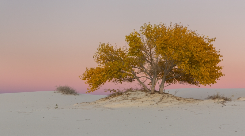 White Sands Fall Color..