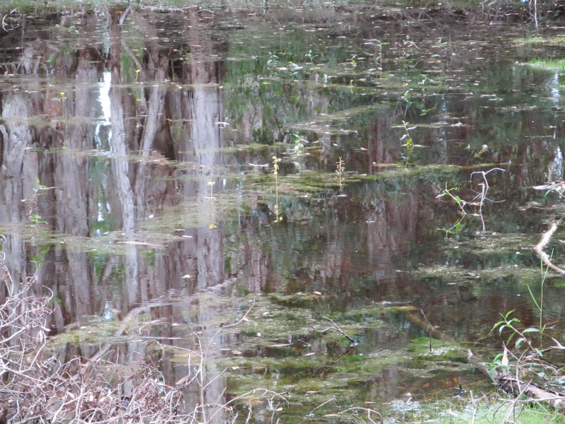 Reflection In The Black Waters Of A Florida Swamp