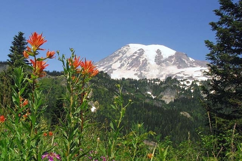 Indian Paint Brush And Mount Rainier
