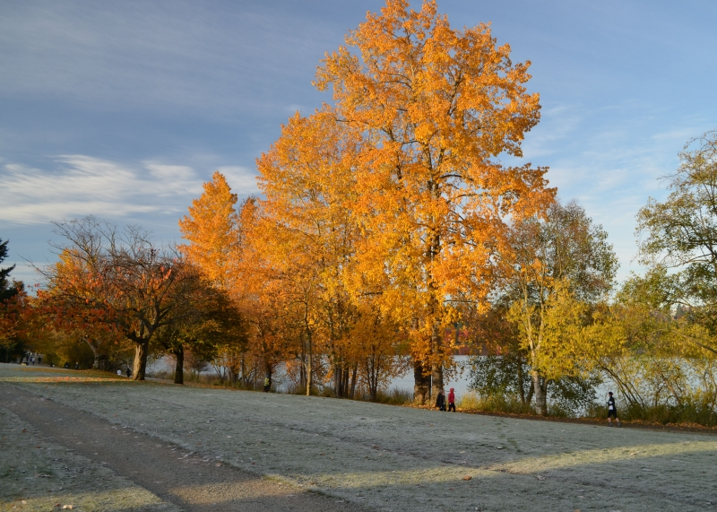 Greenlake In Fall