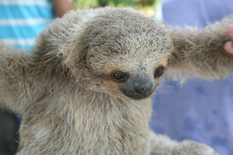 A Little Sloth
