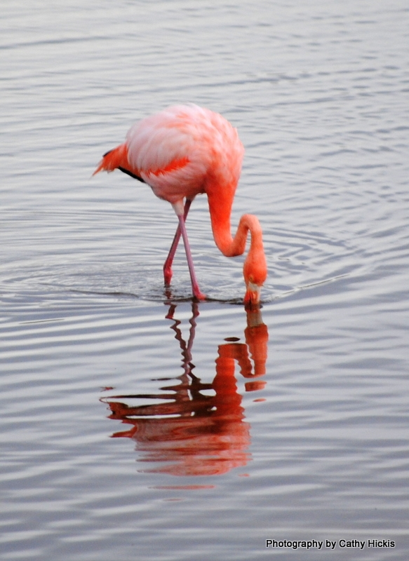 Pink Grace Flamingo