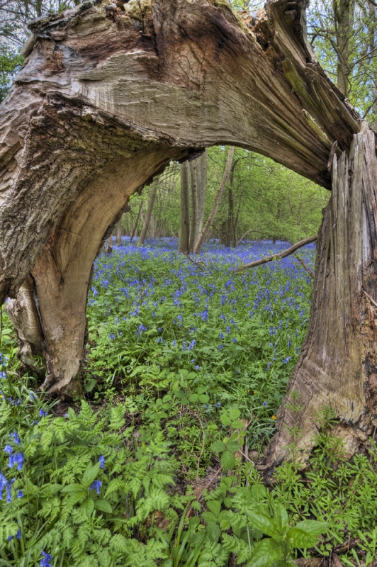Bluebell Arch