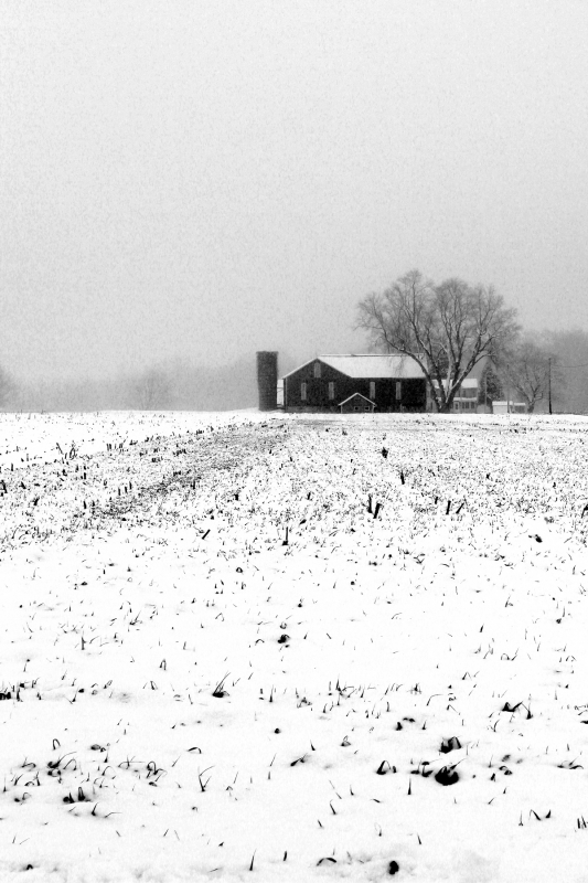 Winter Field 2