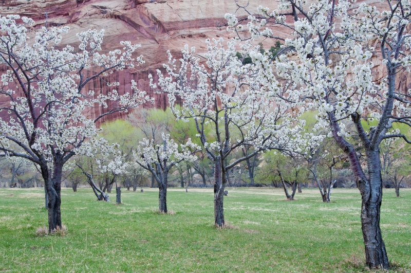 Capitol Reef Spring