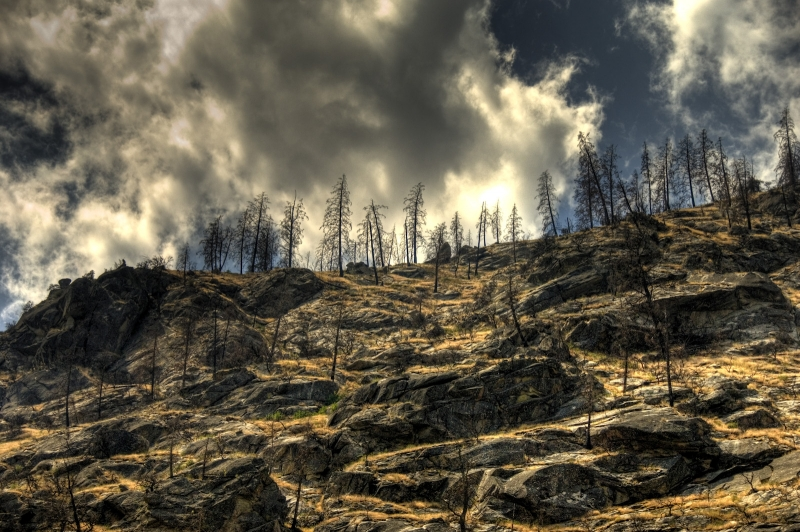 Burned Mountainside On The Middle Fork Of The Salmon River