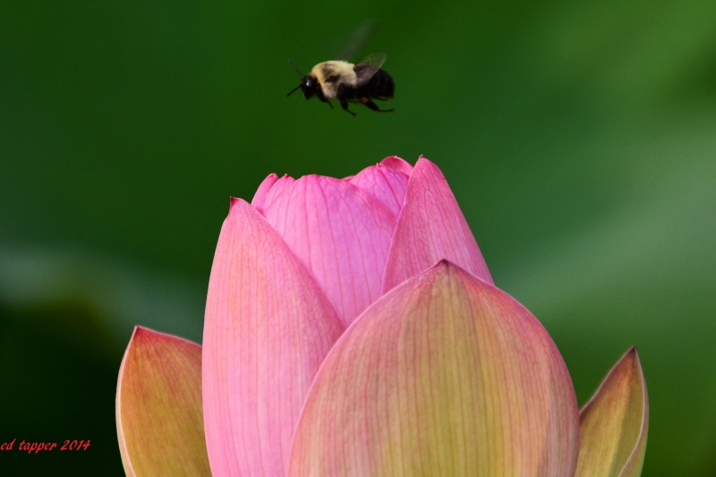 Bee And Lily