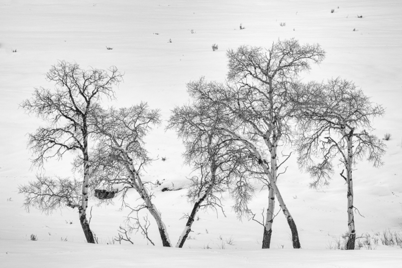 Winter Trees 2