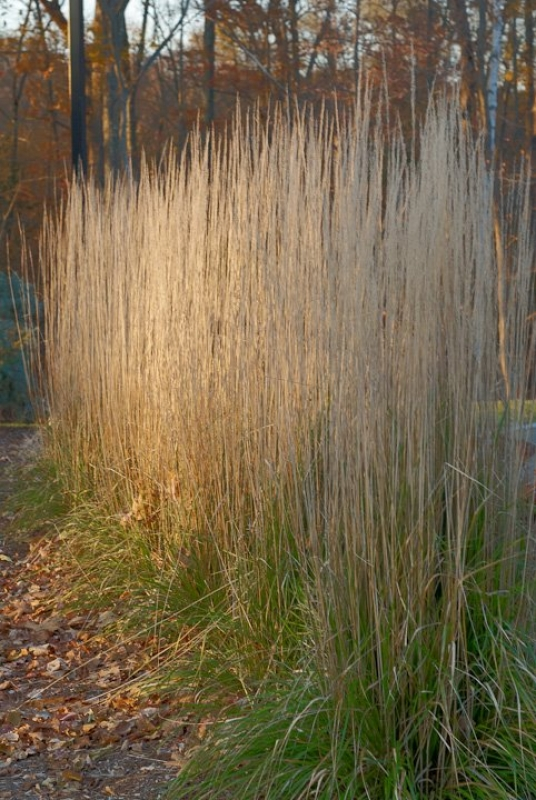 Glow Reeds Two