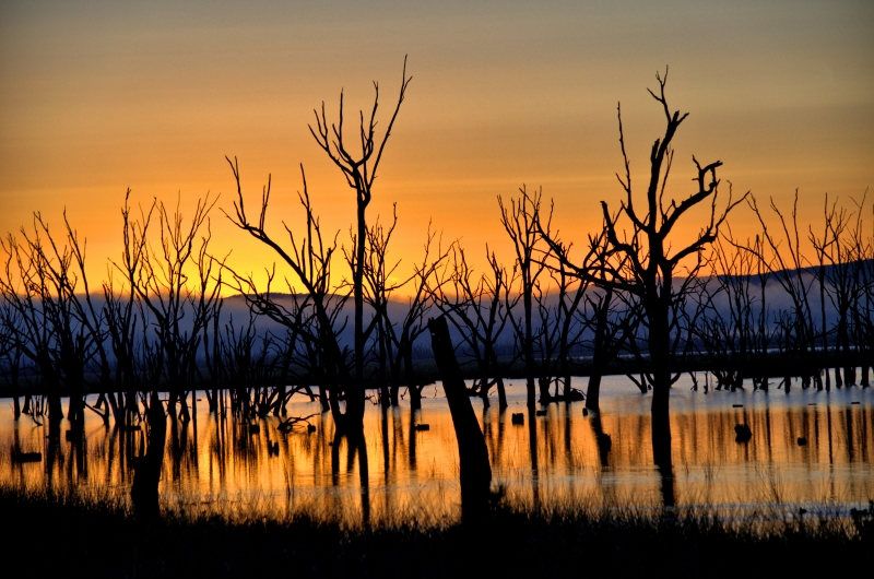 Sunrise In Winton Wetlands