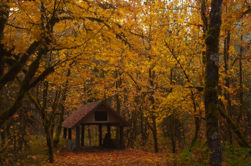 Fall Shed