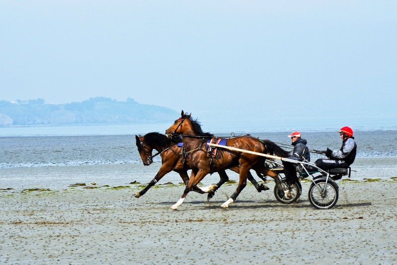 Harness Racing On The Beach Of Morieux France