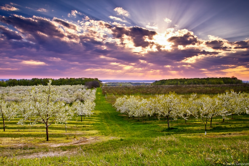 Clouds Burst Over Cherry Orchards